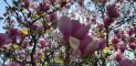 Louise Marie Manor Gardens - Feestzaal - House Of Weddings - 4