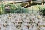 Silverspoon - Traiteur - Catering - Fotograaf MARTIN STEENHAUT - House of Weddings_02