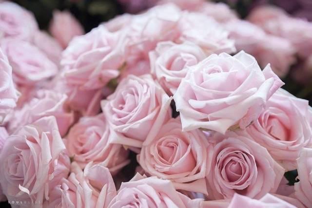 Il etait une fleur - House of Weddings - 84