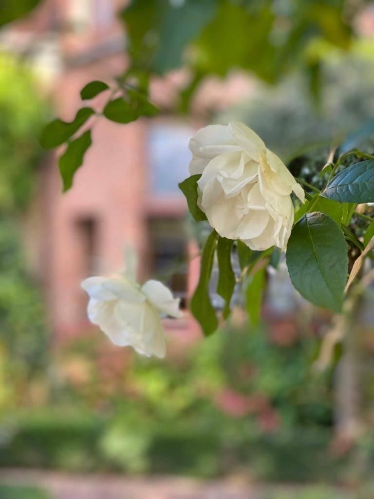 Louise Marie Manor Gardens - Feestzaal - House Of Weddings - 38